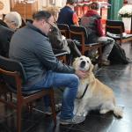 2015-11-08 Hondenwijding Kapellen